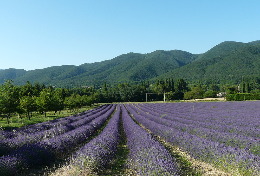 In the Drôme Provençale